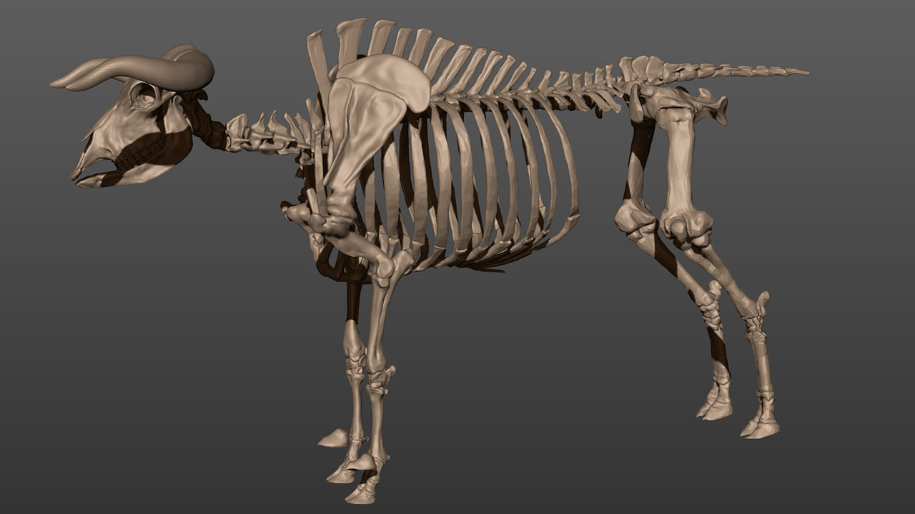 скелет быка картинки временем это вылилось